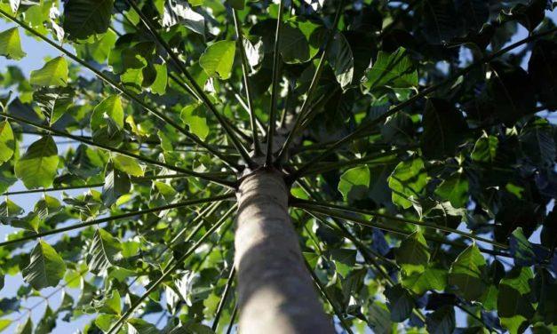 Greentech torna green bonds acessíveis ao pequeno investidor