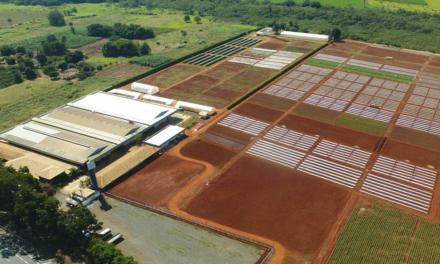 Nova área de pesquisa ampliará desenvolvimento de variedades de hortaliças e frutas pela Agristar do Brasil
