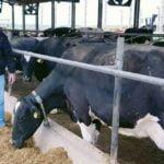 Pecuária leiteira: propriedade no Paraná aumenta taxa de concepção em 12% após utilizar sistema de monitoramento