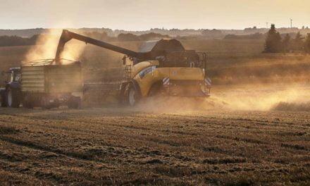 Covid-19 não afeta safra brasileira de grãos