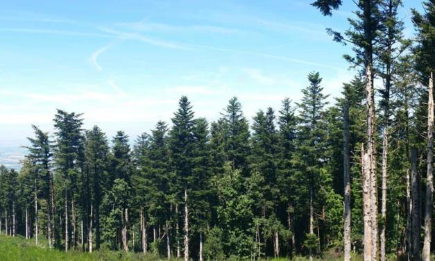 Tendências do Mercado Florestal é tema de apresentação virtual da Pöyry