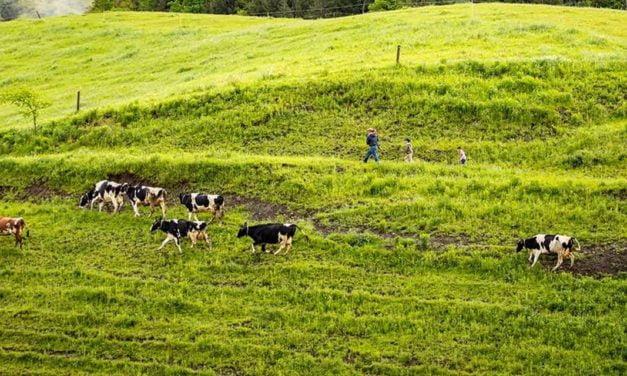 Arma contra mudanças climáticas, agricultura regenerativa ganha adeptos