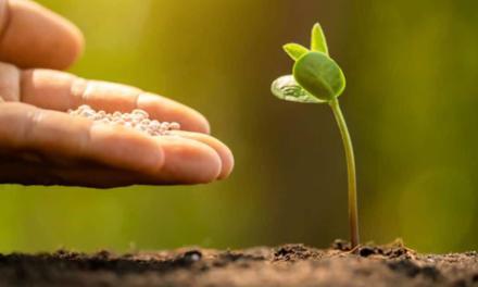 O papel do fertilizante na cadeia de alimentos: entenda por que a produção não pode parar