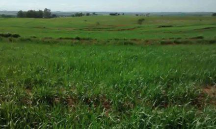 Dia Nacional da Conservação do Solo: Secretaria de Agricultura e Abastecimento desenvolve trabalhos voltados à proteção desse precioso recurso