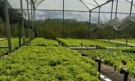 Mongaguá implanta Rede Solidária para fortalecer produção e economia local