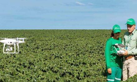 SLC Agrícola apresenta nova edição de seu Relatório Integrado