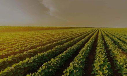 Como a tecnologia revoluciona o monitoramento agrícola