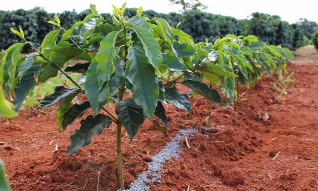 TMF Fertilizantes anuncia produto inovador para cultivo do café