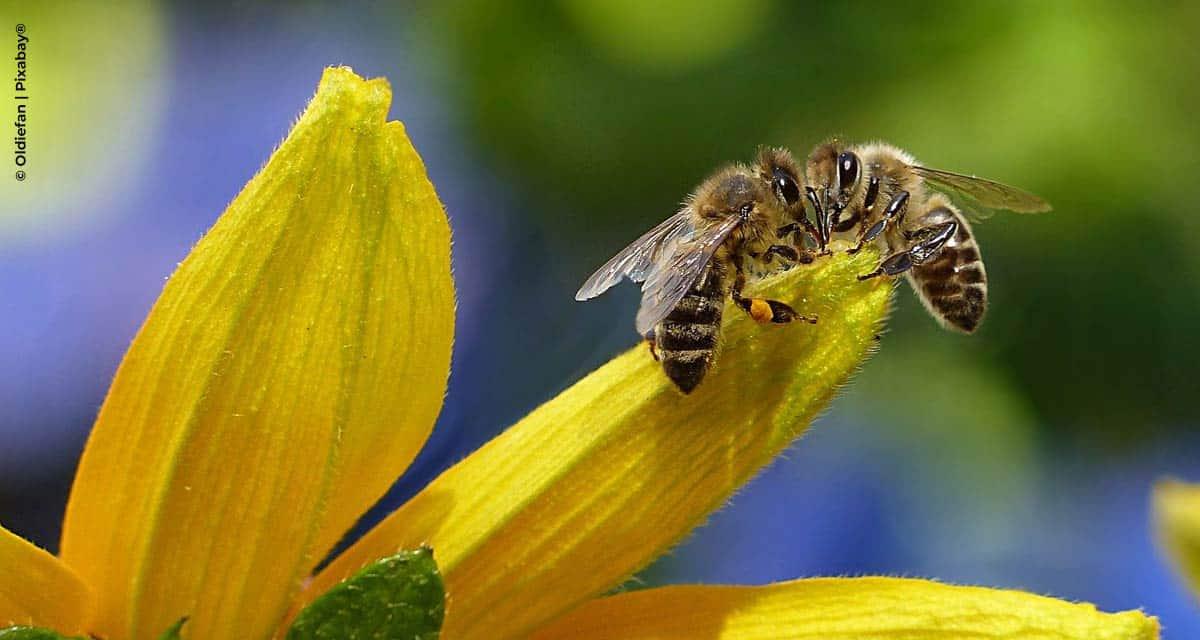 No Dia Mundial das Abelhas, Secretaria de Agricultura apresenta suas ações relacionadas à conservação