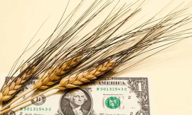 Operações de barter podem ajudar o agricultor a planejar a próxima safra