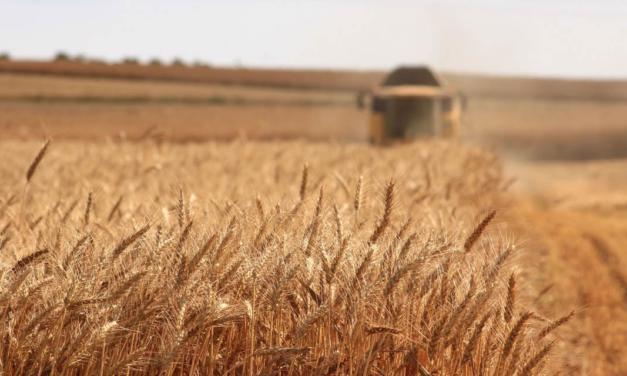 A atenção dos produtores aos desafios fitossanitários do trigo