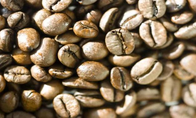 Exportações de café brasileiro atingem 3,3 milhões de sacas em abril