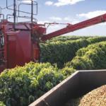 Pesquisa: 25% dos cafeicultores realizam colheita mecanizada