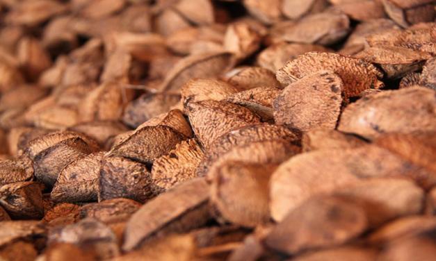 Estudo apresenta raio X do cultivo comercial de castanheira em Mato Grosso