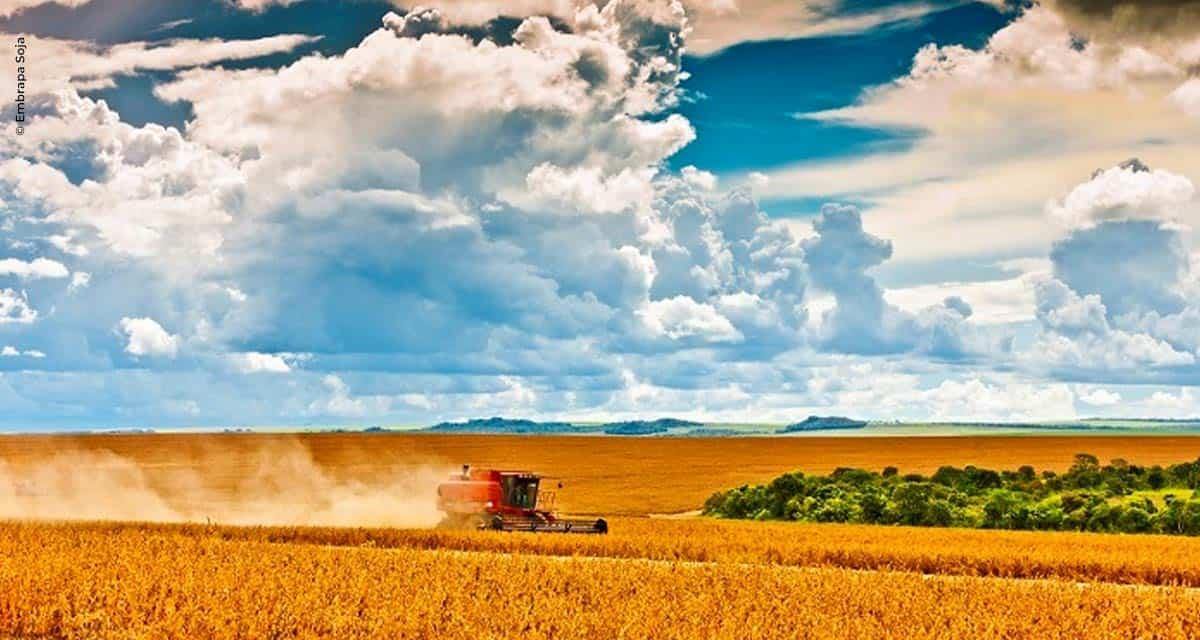 Embrapa apresenta tecnologias para produção de soja no Matopiba