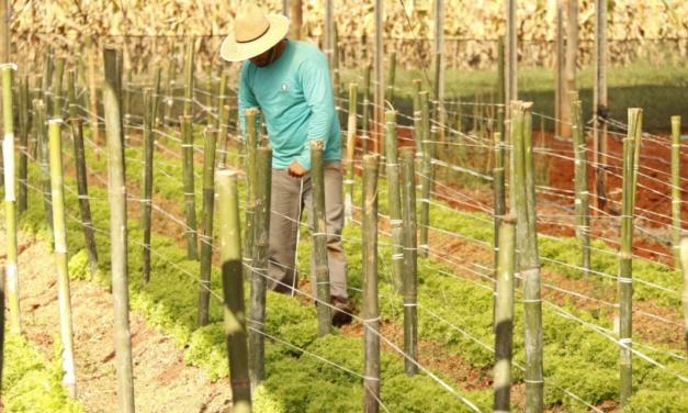 Mercado de Bioinsumos movimenta R$ 1 bilhão por ano. Agricultura Natural já ocupa 50 milhões de hectares