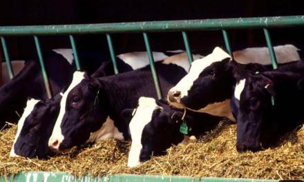 Entressafra do leite: alta no preço dos insumos e escassez exigem planejamento estratégico para enfrentar o período