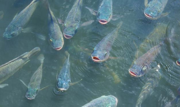 Congresso simplifica processo de liberação de Águas da União para a piscicultura