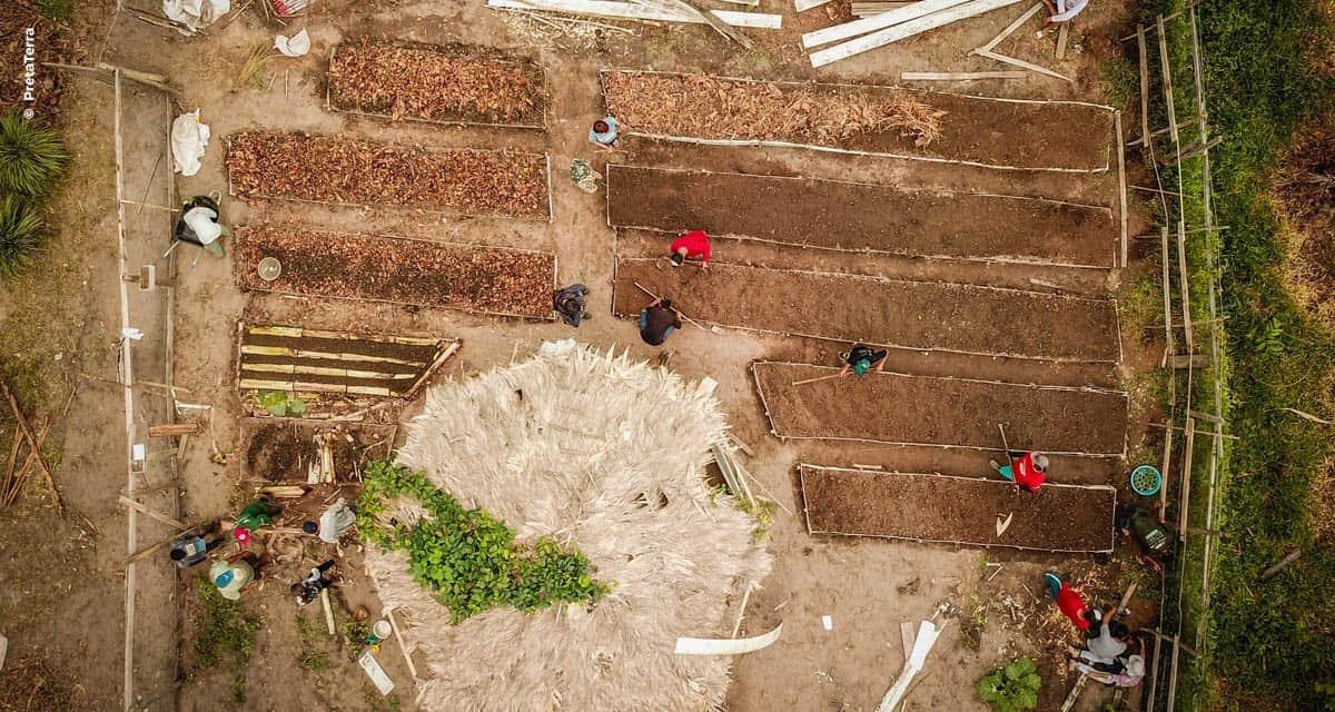 Curso gratuito em Agrofloresta trará fundamentos e caso real