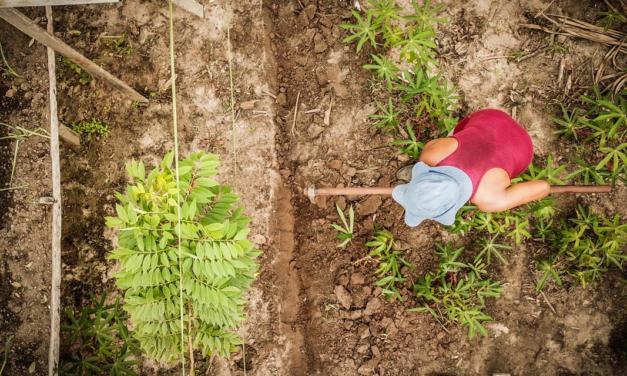 Agrofloresta e o pós-Covid19: a reconstrução do mundo produtivo pela ótica da natureza