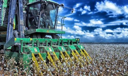 Colheita de algodão se inicia em junho na Bahia