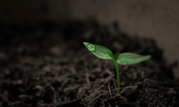 Biológicos, manejo integrado e aumento de produtividade