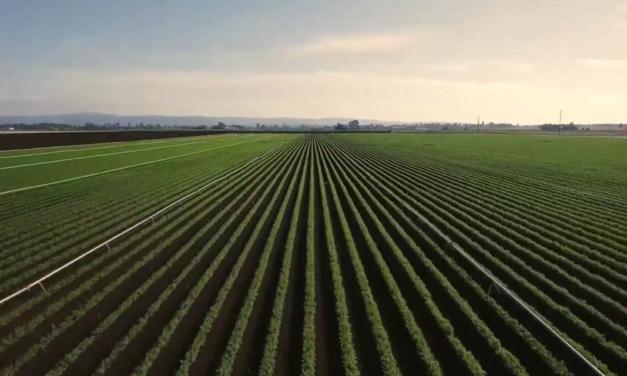 Especialistas apontam que Brasil é exemplo de produção sustentável em larga escala