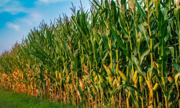 Oportunidades e desafios para proteínas animais e grãos na pós-pandemia