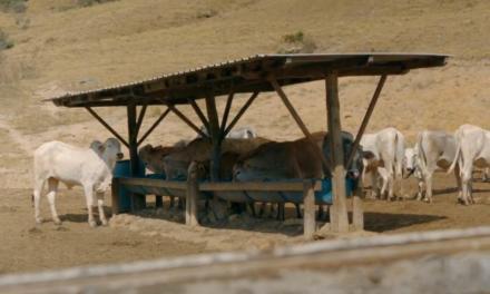 Suplementação eficiente na seca é crucial na lucratividade da pecuária