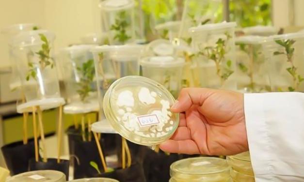 Secretaria de Agricultura e Abastecimento mantém programa de inovação e transferência de tecnologia em controle biológico