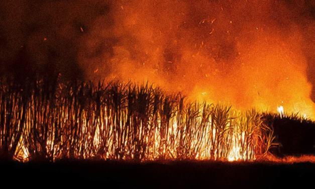Tereos investe em ações preventivas e de combate a incêndios