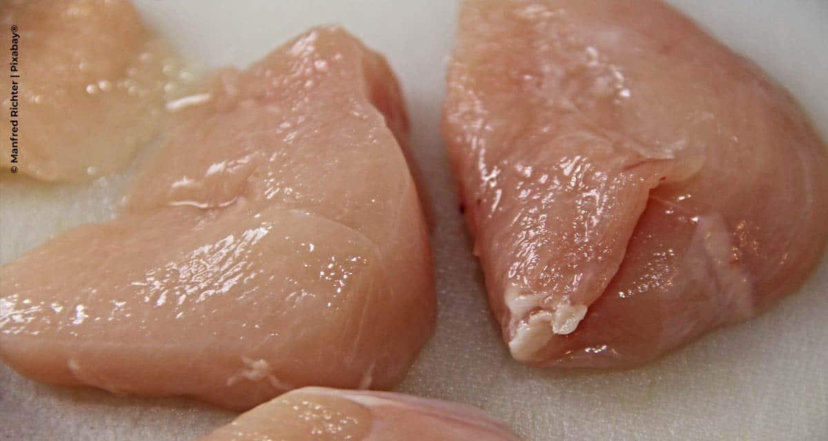 O controle integrado da salmonela na produção avícola