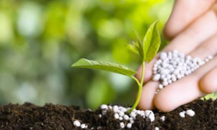 Mercado de fertilizantes: momento é favorável para compra de insumos