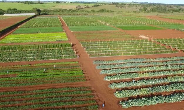 Dia de Campo da Agristar será online e trará novidades para a horticultura