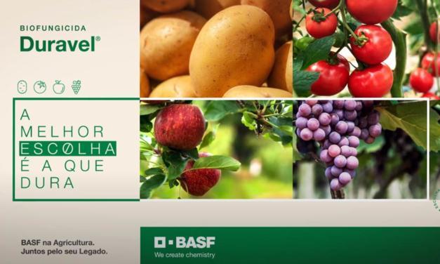 Novo biofungicida da BASF permite controle de doenças em frutas e hortaliças