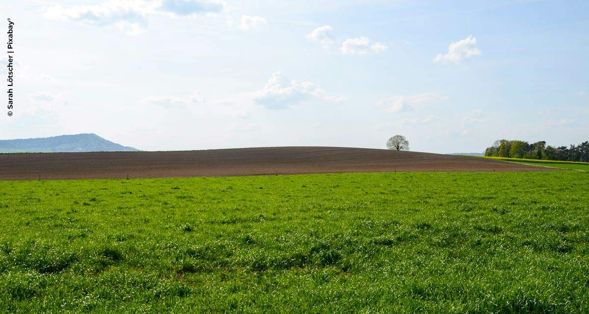 Bayer recompensará agricultores que gerarem créditos de carbono a partir de práticas agrícolas sustentáveis