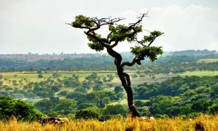BRF assina comunicado do setor empresarial em apoio à preservação dos biomas brasileiros