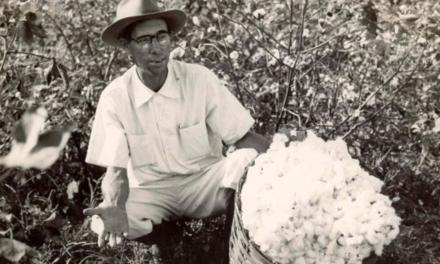 Centro de Memória Bunge relembra uso do algodão nos primórdios da Bunge no Brasil