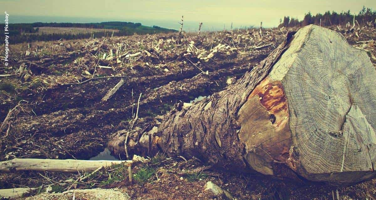 Empresários cobram medidas efetivas de combate ao desmatamento ilegal