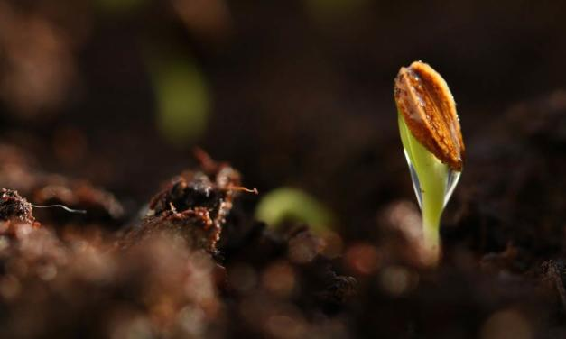 Tecnologia melhora plantabilidade das sementes e traz nutrientes essenciais ao desenvolvimento inicial do milho