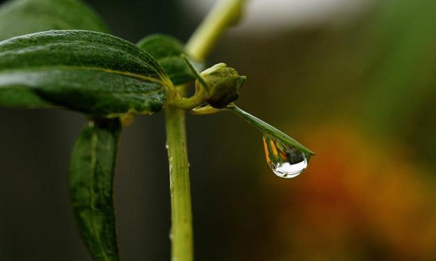 Mitos e Fatos na agricultura irrigada (Parte II)