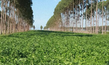 Embrapa e Bayer estabelecem cooperação para apoiar mercado de carbono para agricultura