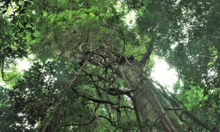 Retrato atual das florestas no mundo