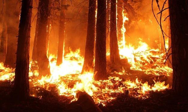 Equipamento detecta e soa alarme para incêndios florestais