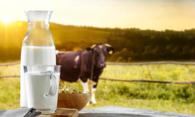Sustantabilidade no campo: projeto auxilia pequenos produtores de leite durante período de seca