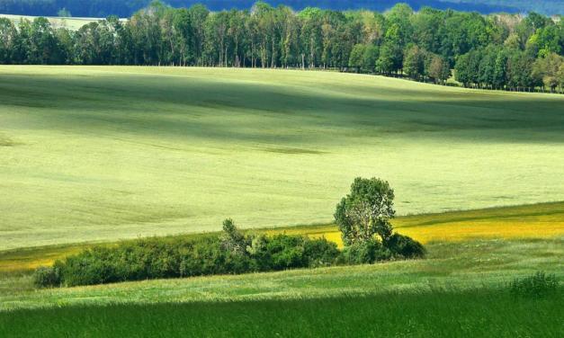 A questão ambiental será mina de ouro ao agro