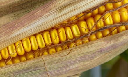 Reunião de validação apresenta proposta para Zoneamento Agrícola de Risco Climático (Zarc) do milho no Amazonas