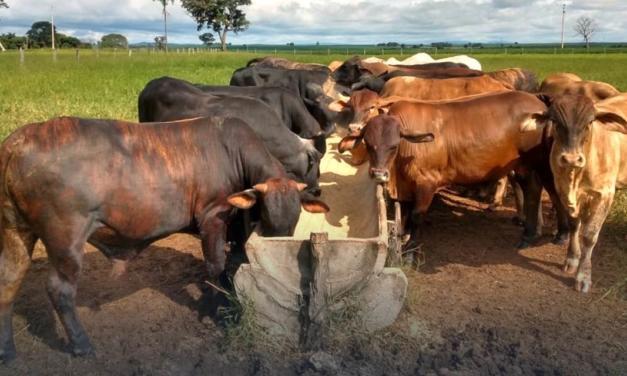 Com suplementação estratégica, Fazenda Matinha em Goiás consegue rápida terminação a pasto e maior lucratividade