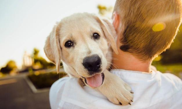 Campanha Criador Legal lança vídeo sobre a importância das boas práticas de criação e da posse responsável dos pets