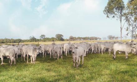 Premix se une à ABCZ em projeto que visa aprimorar qualidade da carne de raças zebuínas
